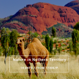 Immersion Nature & Northern Territory