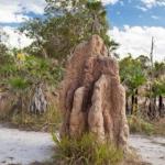 Parc National de Lithfield en Australie