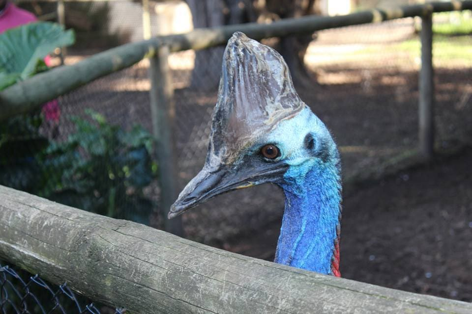 Animal d'Australie