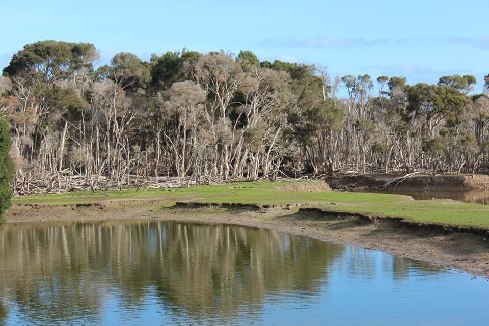 Paysage de la forêt en Australie